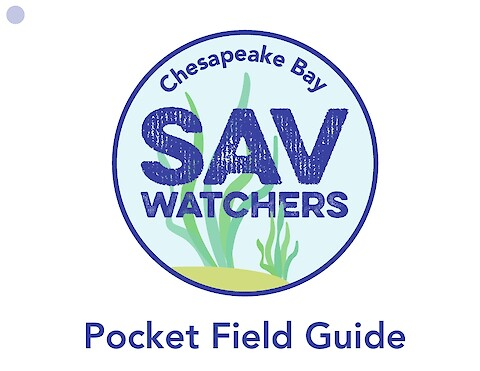 Chesapeake Bay SAV Watchers - Pocket Field Guide (Online viewing version) (Page 1)