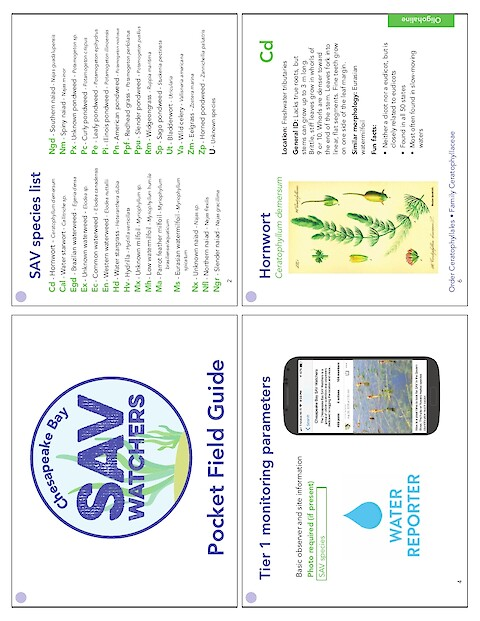 Chesapeake Bay SAV Watchers - Pocket Field Guide (Printing version) (Page 1)