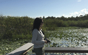 IAN staff look out over the Everglades wetlands at the boardwalk at Royal Palm visitor center. Trees are visible in the background, emergent plants are visible in the water in the foreground.