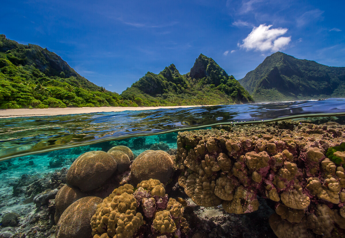 Partially underwater photo of a healthy coral reef in the American Samoa.