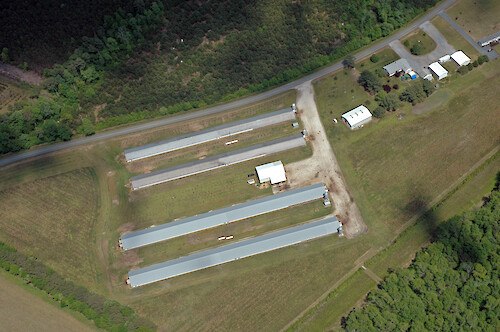 Poultry houses in Chincoteague Bay watershed.