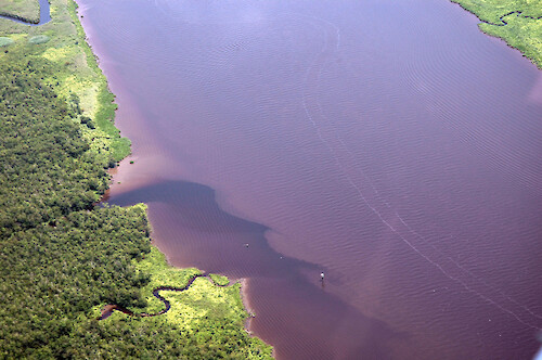 Plumes coming from tributaries of the Nanticoke River, after the excessive rains of June 2006