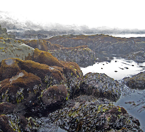 Rocky intertidal area at Sea West, north of Morro Bay, California
