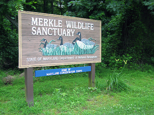 Merkle Wildlife Sanctuary on the upper Patuxent River. This was one of the overnight stops on the annual Patuxent Sojourn paddle.