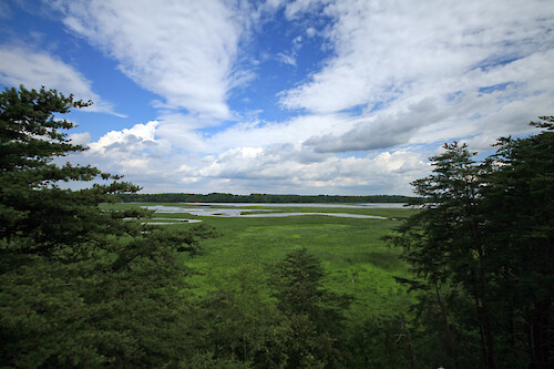 View over the upper Patuxent River from the observation tower at Merkle Wildlife Sanctuary. This stretch was paddled during the last day of the 4-day Patuxent Sojourn paddle.