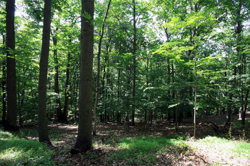 Forest in Monocacy National Battlefield