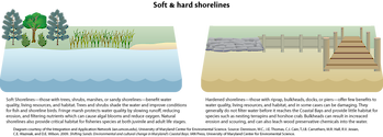 Conceptual Diagram illustrating the elements of a soft shoreline and how they can benefit a habitat, versus the elements of a hard shoreline that offer few benefits towards a habitat, and in some cases can be damaging.