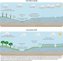 Conceptual diagram illustrating the groundwater flow, and related processes based on season and precipitation in the Delmarva area.