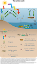 Conceptual diagram illustrating the carbon cycle relative to waterways, and the organisms that live there.