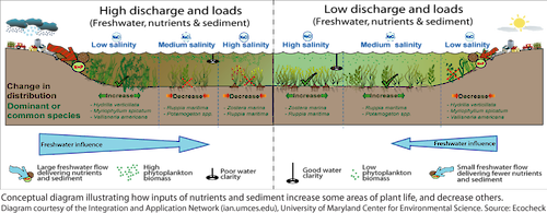 This conceptual diagram depicts the main factors controlling distribution of aquatic grass community types in Chesapeake Bay. The diagram compares high water discharge and loads to low water discharge and loads.