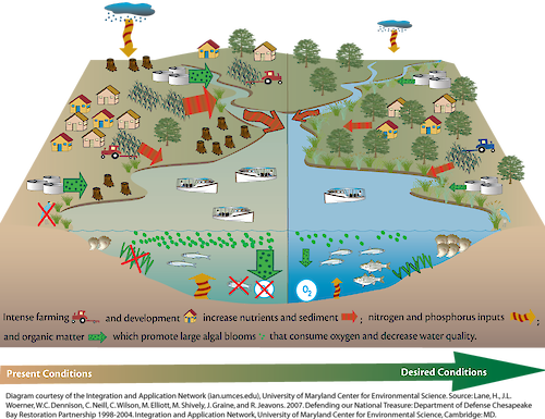 Conceptual diagram illustrating the long term restoration goals in the Chesapeake Bay, USA.