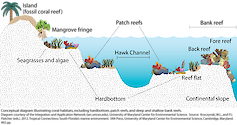 Conceptual diagram illustrating coral habitats from Cape Florida to the Dry Tortugas. In this region, corals occur on hardbottom habitats, patch reefs, and deep and shallow bank reefs.