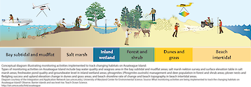 Conceptual diagram illustrating different monitoring activities implemented on Assateague Island to track changing habitats. Monitoring activities - which are habitat specific - include water quality, seagrass area, salt marsh nekton survey, surface elevation table, plover nests and fledgling success, upland elevation change, shoreline rate of change, and beach topography. Diagram from /link/tos_barrier_observe