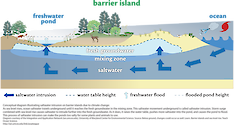 Conceptual diagram illustrating saltwater intrusion on barrier islands due to climate change. As sea-level rises, ocean saltwater travels underground until it reaches the fresh groundwater in the mixing zone. Diagram from /link/tos_barrier_learn