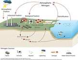 Conceptual diagram illustrating the nitrogen cycle, including the Haber-Bosch process. Diagram from /link/blog_nitrogen-fixation