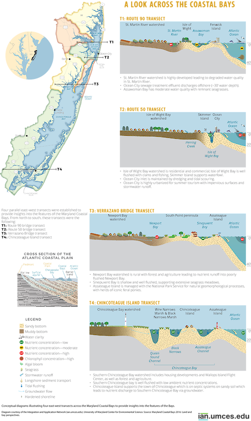 Conceptual diagrams illustrating four east-west transects across the Maryland Coastal Bays to provide insights into the features of the Bays.