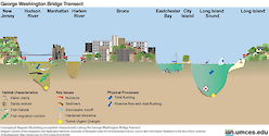 Conceptual diagram illustrating ecosystem characteristics along the George Washington Bridge Transect. Source: New York Harbor: Resilience in the face of four centuries of development.        http://dx.doi.org/10.1016/j.rsma.2016.06.004