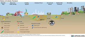 Conceptual diagram illustrating ecosystem characteristics along the Statue of Liberty Transect. Source: New York Harbor: Resilience in the face of four centuries of development. http://dx.doi.org/10.1016/j.rsma.2016.06.004