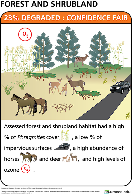 Conceptual diagram showing condition of forest and shrubland habitats of Assateague Island.