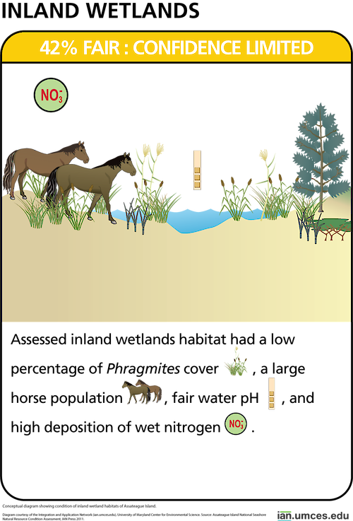 Conceptual diagram showing condition of inland wetland habitats of Assateague Island.