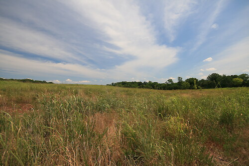 Warm-season grasslands in Manassas National Battlefield Park. Warm-season grasslands are ecologically diverse and provide habitat for many species of birds, insects, and small mammals