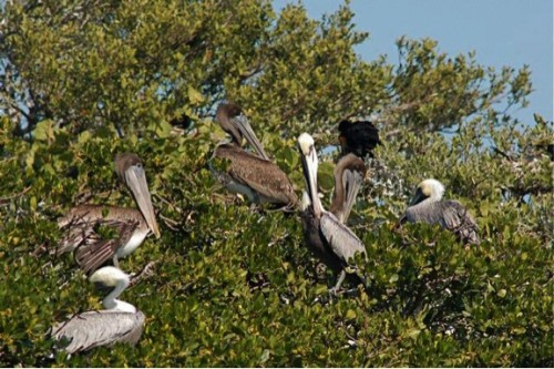 Bird Island is one of the most productive breeding grounds for more than 15 species of birds and a rookery/visiting grounds to even more species. Photo by Sunshine Wildlife Tours.